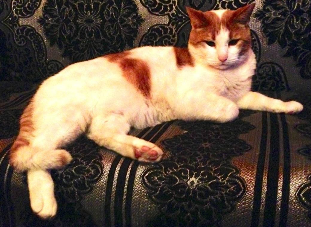 Cat content! Gehört zum Internet dazu! Rizla aus dem 1e Hulp