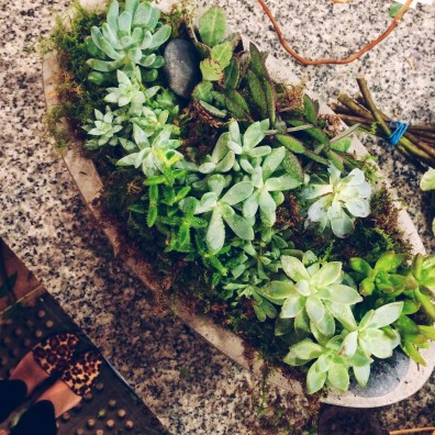 Potting succulents in a big concrete planter by Accent Decor.