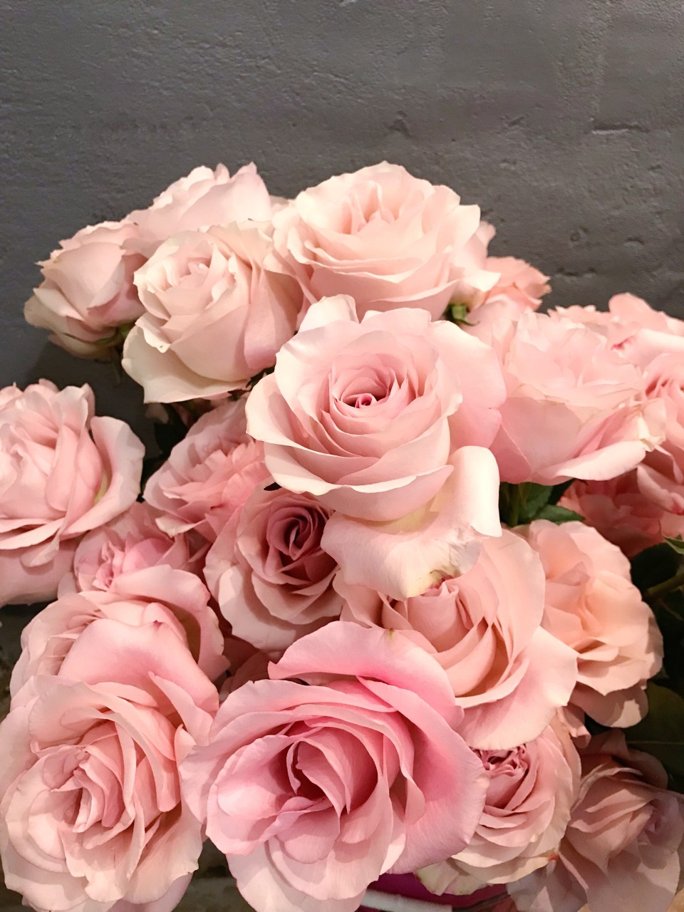 Bucket of pink 'Secret Garden' roses in front of a gray concrete wall.