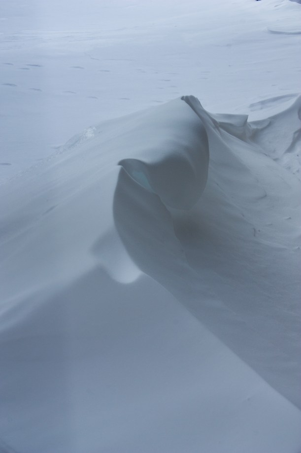 what the wind makes out of snow