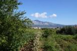 Winery garden at Lumbarda