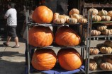 Ready for Halloween with supersize pumpkins