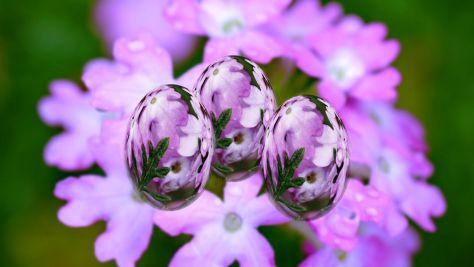 P2200053ー花の卵