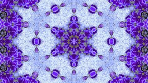 P1020100ー紫の真珠-2