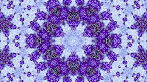 P1020100ー紫の真珠-3