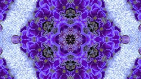P1020100ー紫の真珠-1