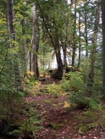Maine path 2