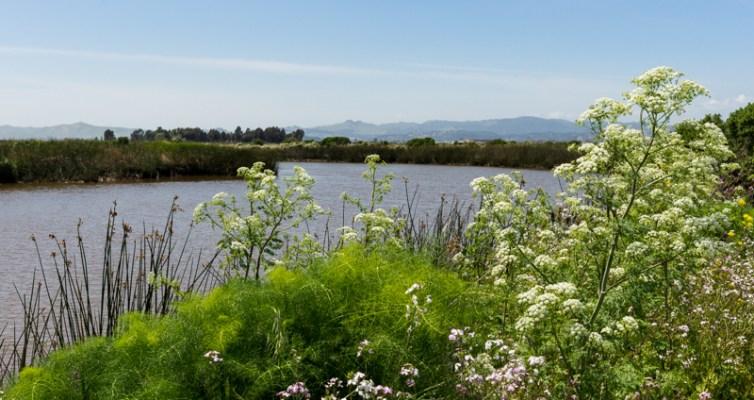 Suisun Marsh, Spring 2014