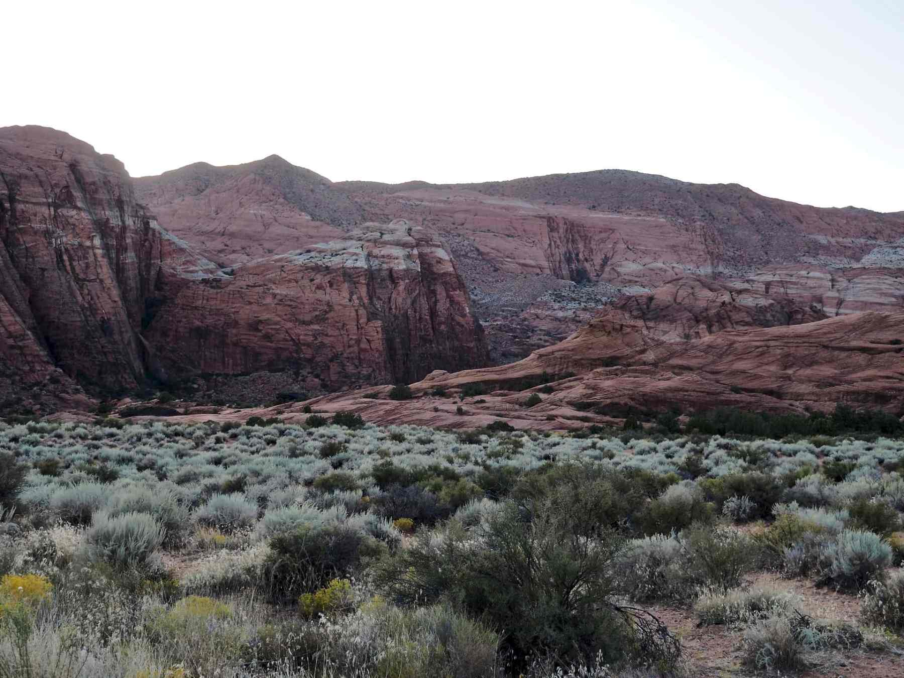 great contrast between the scrub brush and red rock