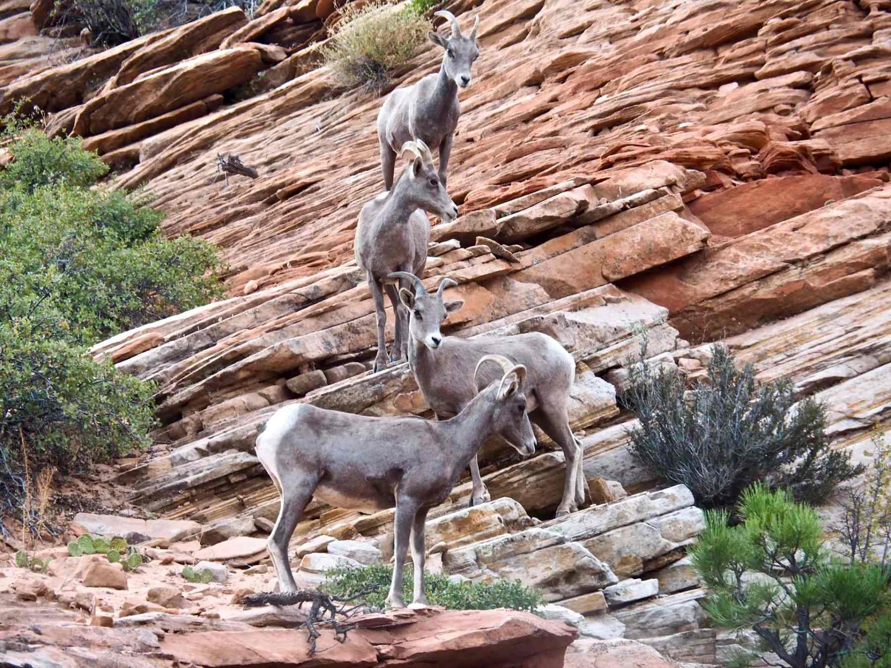 It was so much fun to see the bighorn sheep!