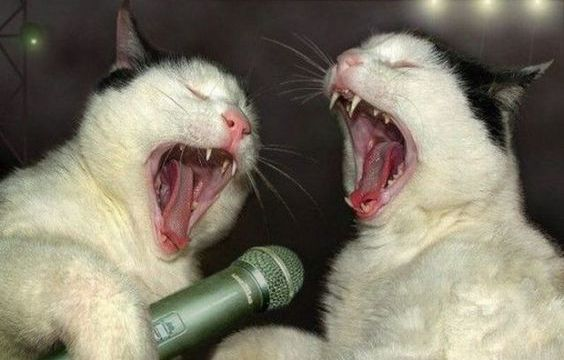 https://i1.wp.com/keithlovesmovies.com/wp-content/uploads/2016/02/singing-cats.jpg?resize=564%2C360&ssl=1