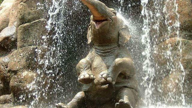https://i1.wp.com/keithlovesmovies.com/wp-content/uploads/2016/03/happy-elephant-is-happy.jpg?resize=640%2C360&ssl=1