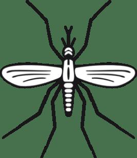 mosquito-clip-art