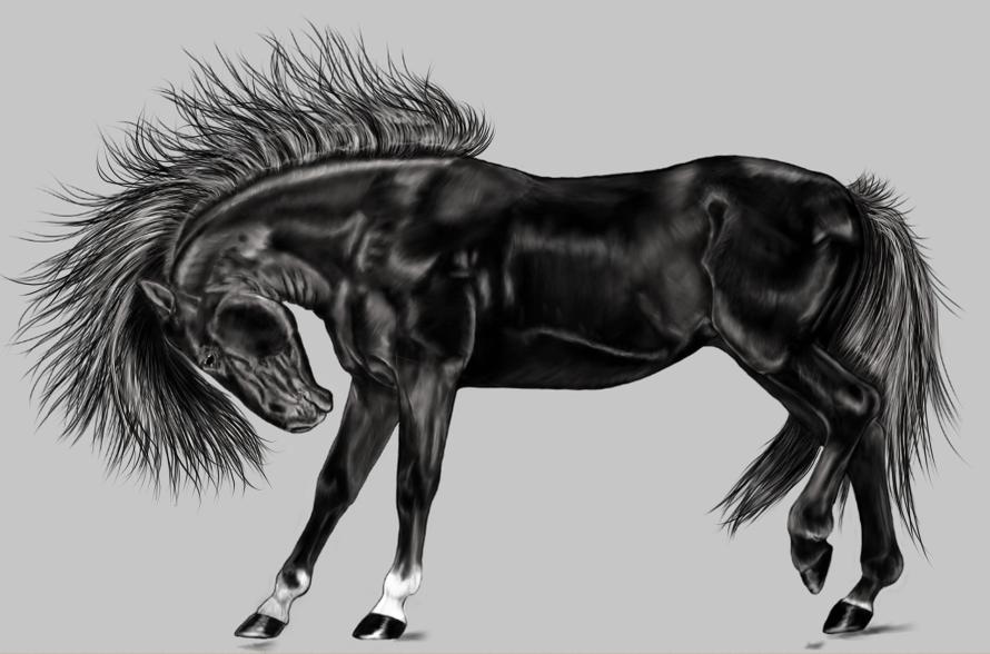 horse-1940660_1920