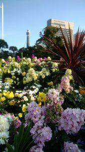山下公園花壇開花