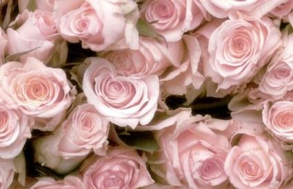 Rose Petals and Mint