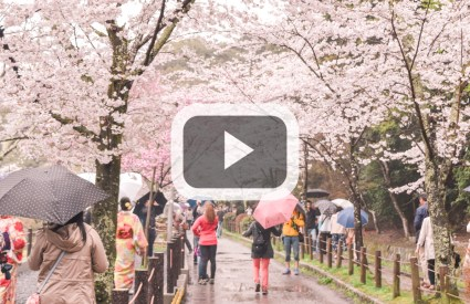 Travel Video: Spring in Japan