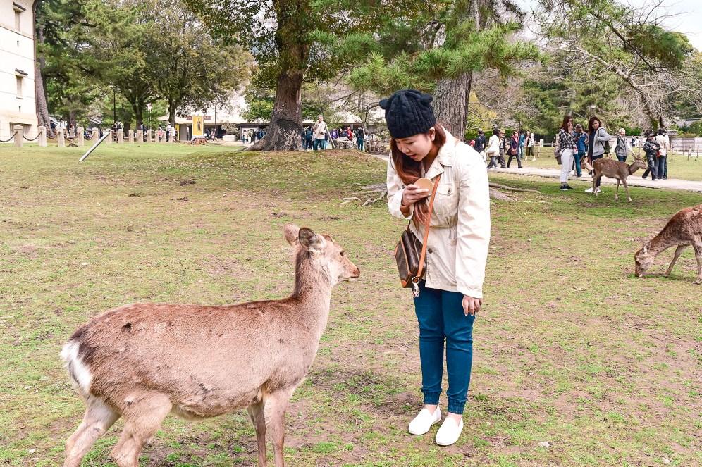 Feeding the deer in Nara Park