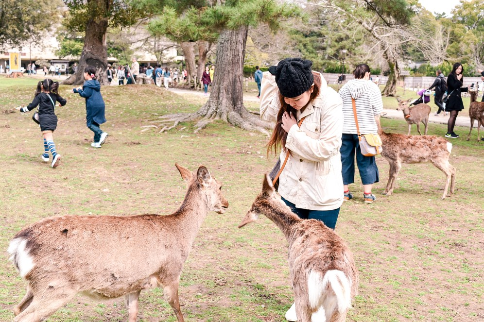 Feeding the deer in Nara Park