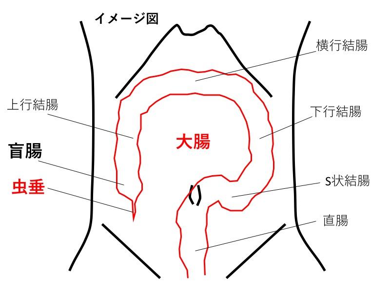 盲腸 本田 翼