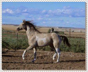 lukisan kuda 8