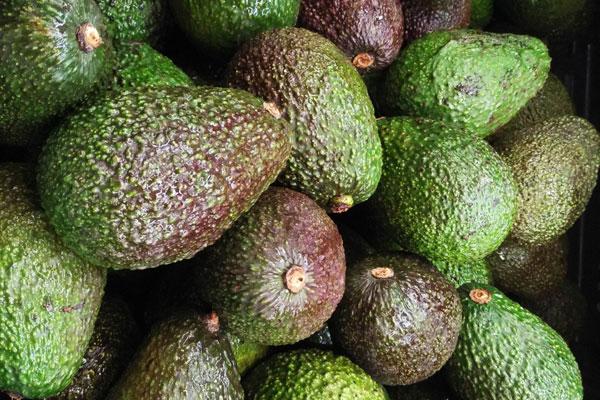 avocado_avocat_hass_delivery_lebanon