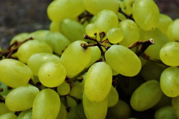 raisin_grapes_vert_green_long_delivery_lebanon