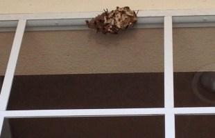 Sorry Wasps, You Gotta Go!