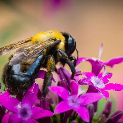 Bee on a Flower | Kelley K Photography