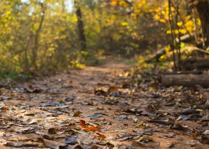 Fine art image of fall leaves on dirt nature trail at sunrise