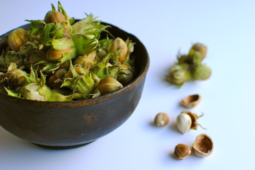 fresh kentish cobnuts
