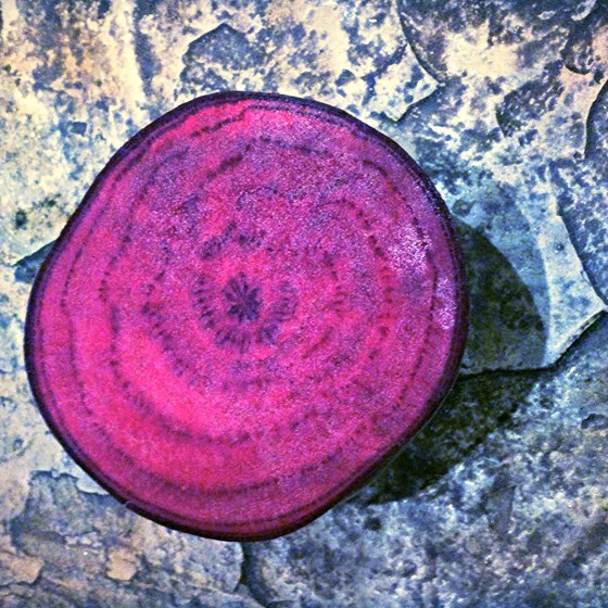 beet cross section