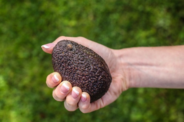 Hass avocado in female hand over grass background
