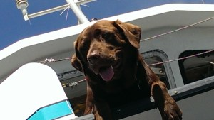 Duke, intrepid sea dog belonging to the captain of the Sea Wolf II