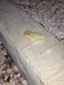 Gorgeous fellow in my backyard