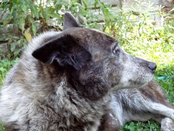 Regarding my 1,000-year-old dog. (2/2)