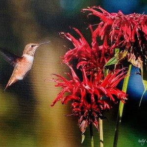Hummingbird printed on canvas