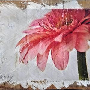 Pink Gerber Wall Decor by Kelly Cushing