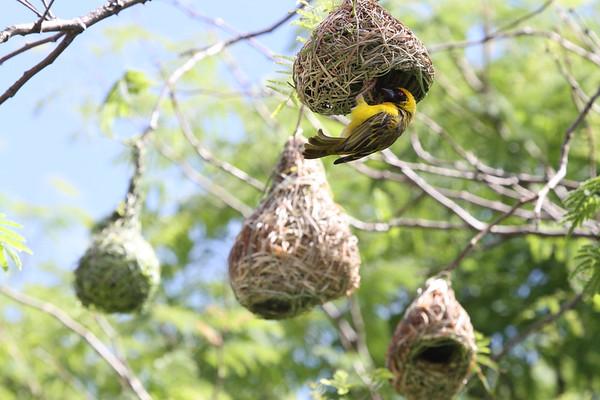 Working on Nest #4