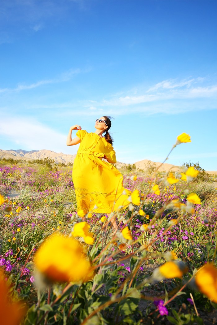 Desert Super Bloom | Kelly Golightly