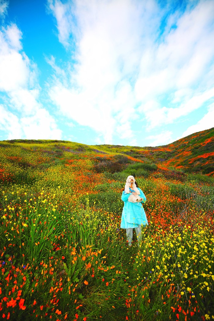 ke Elsinore poppy fields | Kelly Golightly