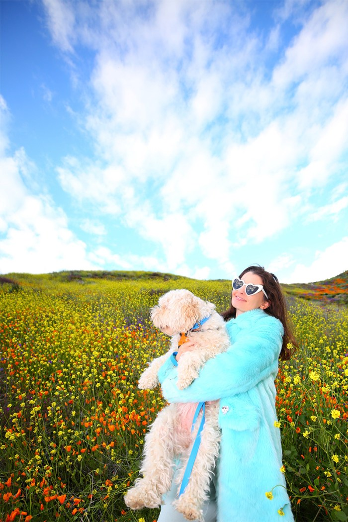 Super Bloom Lake Elsinore | Kelly Golightly