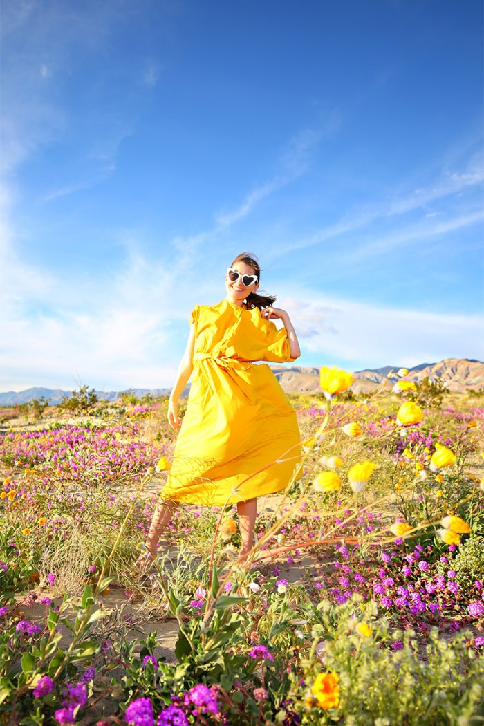 Where To See the Super Bloom   Kelly Golightly