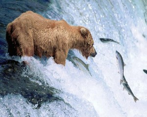 Grizzly_Bear_Gone_Fishing-1280x1024