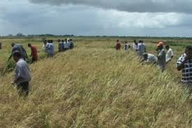 Farmers in the Builsa Region of Northern Ghana