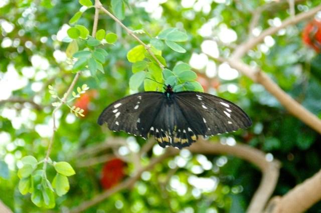 butterfly on greenery