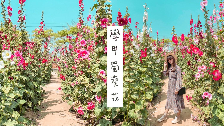 【台南景點】一年一度的學甲光華社區蜀葵花季,花海迷宮盛開鮮豔!!