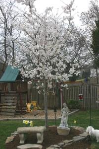 Spring_flowers_2006_014
