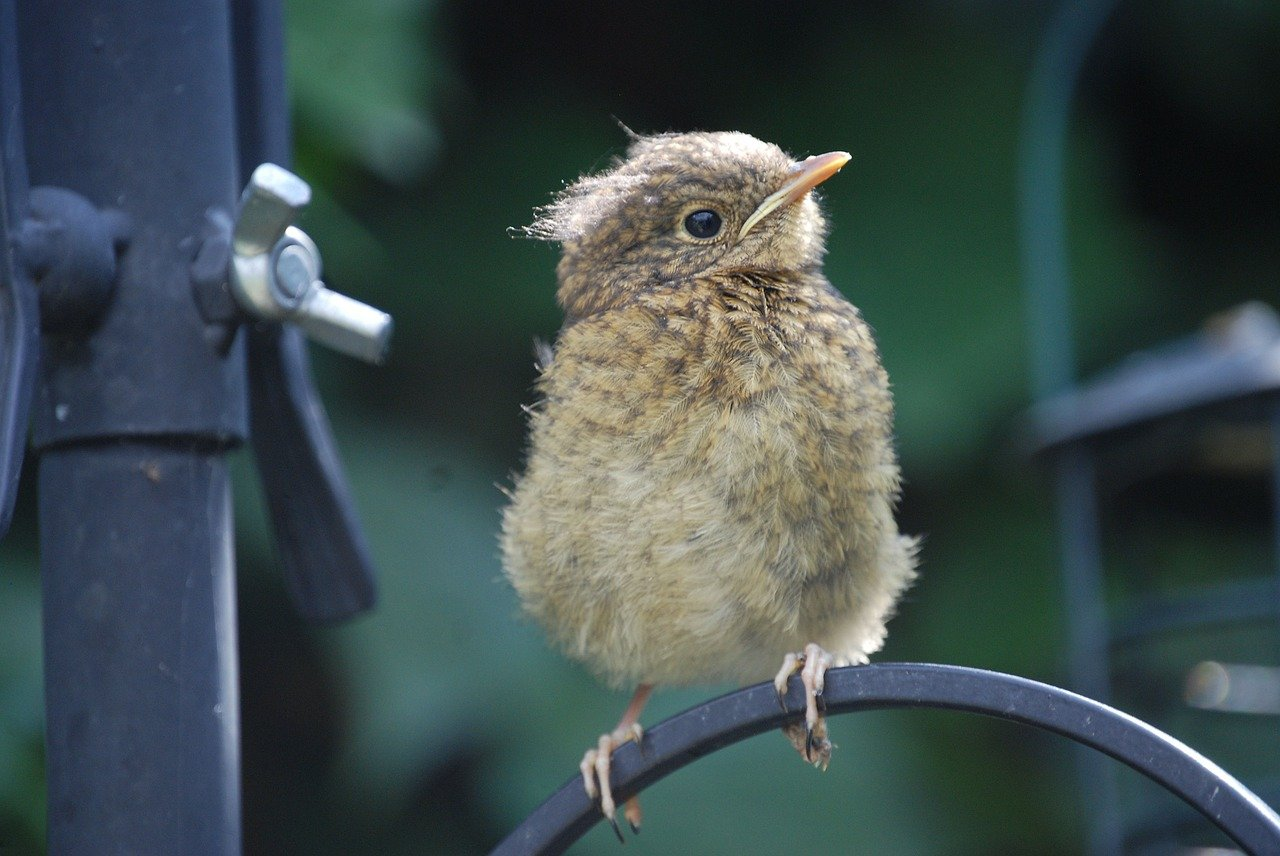 Fledgling Flight – You Have Got Your Wings