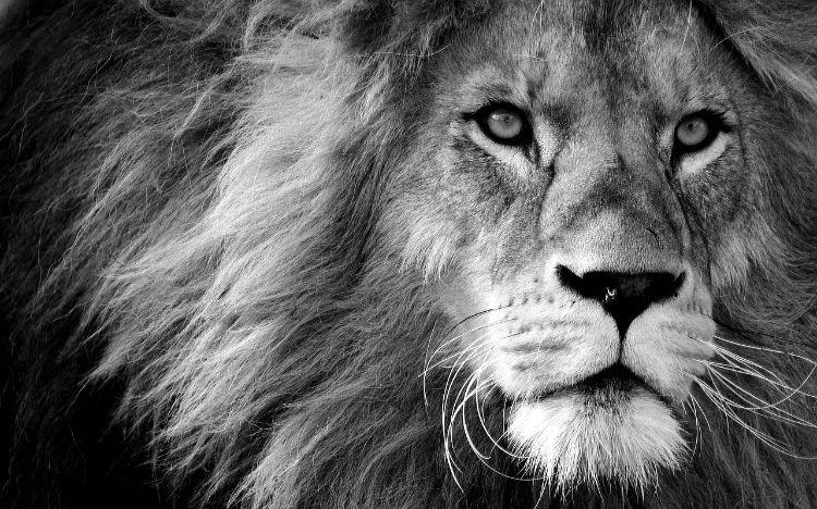 lion empowerment